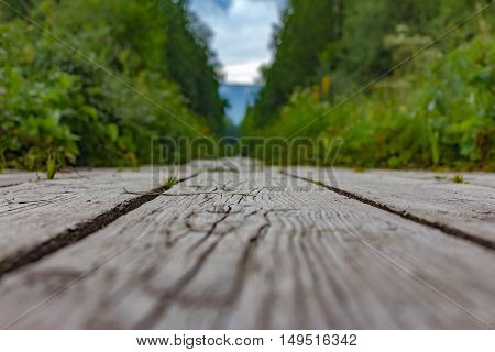 Wooden Health Trail In The Mountain Out Of Focus In The Midst Of Green Forests.