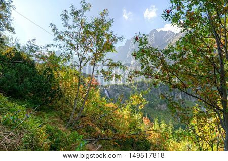 Summer mountain landscape. Rowan trees with a waterfall and mountain peaks in the background.