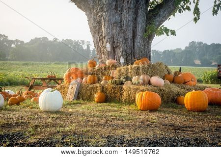 A nice display of pumpkins on a haystack under a tree in rural Central New Jersey.