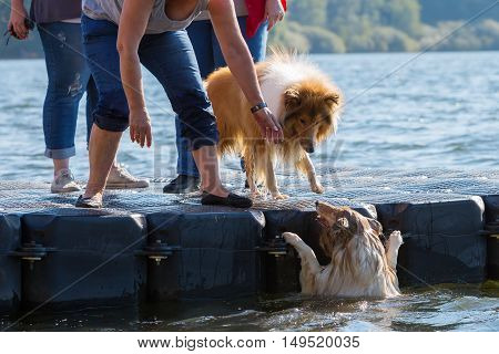 Scene With A Dog Who Is Fallen In The Water