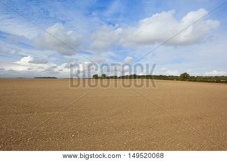 Cultivated Soil In Autumn