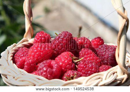 Fresh ripe raspberries in the wicker basket