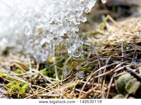 Spring melting ice on the ground. Grass sprouts under the melting ice. Earth day.