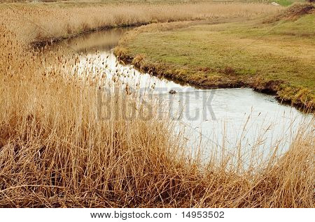 River With Dry Reeds On The Banks