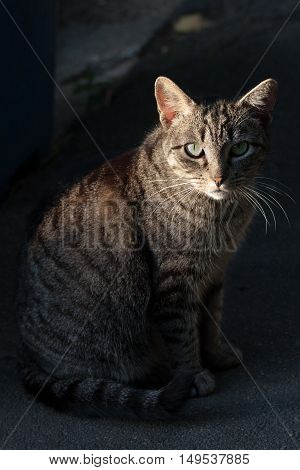 Closeup of hypnotic alley cat on the dark