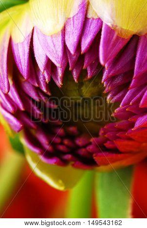 Alien Flower - Budding Flower Head that looks almost monster-like
