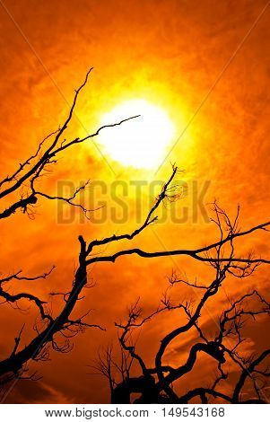 Scorched Earth - Haunting Bright Blazing Sun