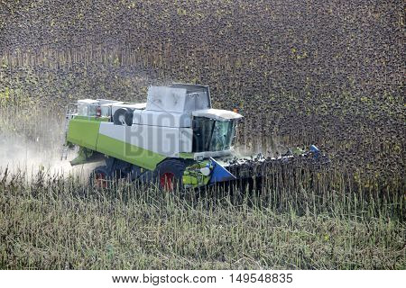 Combine is working in the field at autumn. Harvester is cutting ripe dry sunflowers. Agriculture. Long-focus