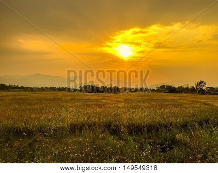 Sun sunset ligth garden color yellow nature view beautiful