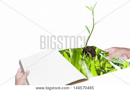 Environment concept hand with book and new life plant isolated white background