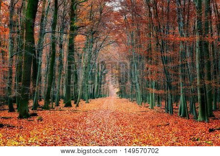 Pathway in the bright autumn park