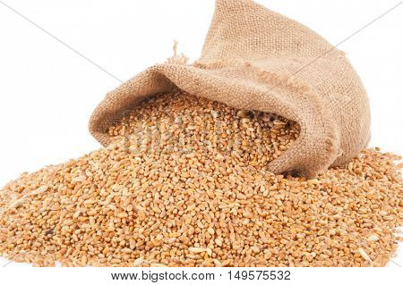 Sack of wheat grains