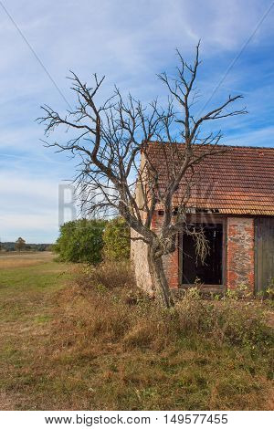 Old abandoned barn and dead tree. Abandoned farm buildings with weathered wall.