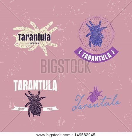 Vector logo set with Tarantula spider. The Tarantula as main element of logotypes