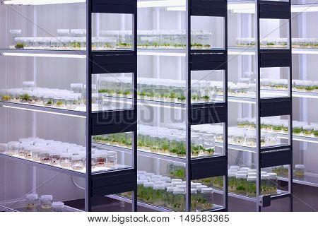 Meristem tissue culture laboratory for plant growing.