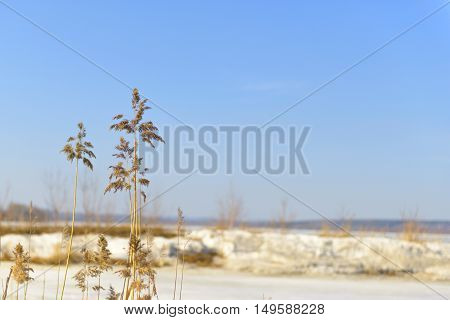 dry reed on a blurred background of spring pond under the ice and blue sky