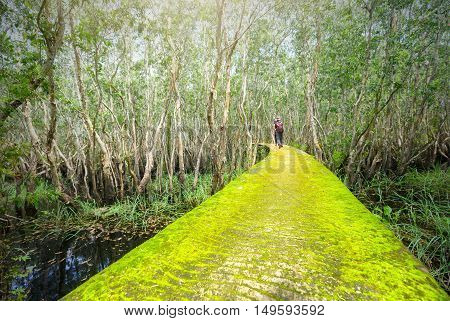 Long An, Vietnam - September 18th, 2016: The road through the melaleuca forest moss, so far as the shadow of a man walking toward the end of road as going out beautiful life in rural Vietnam