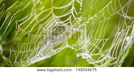 Banner of spider web with dewdrops on the morning