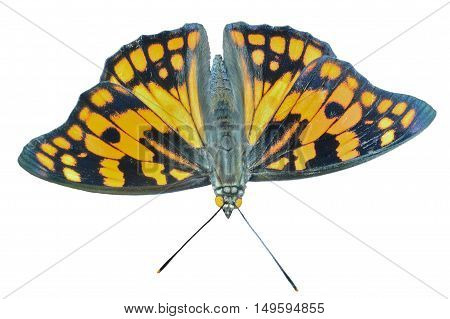 A close up of the butterfly (Sephisa dichroa princeps). Isolated on white.