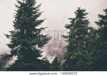 Coniferous Forest Landscape with foggy mountains on background Travel serene scenic view moody weather