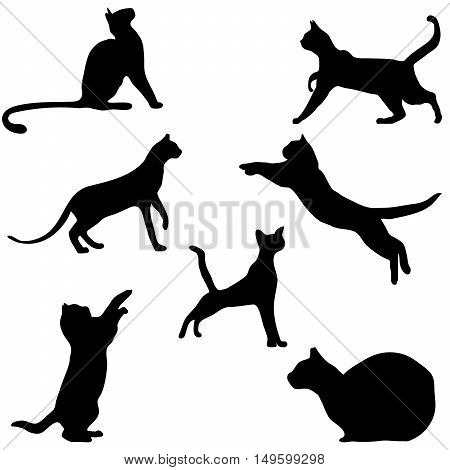 Vector collection of cat silhouettes, vector illustration