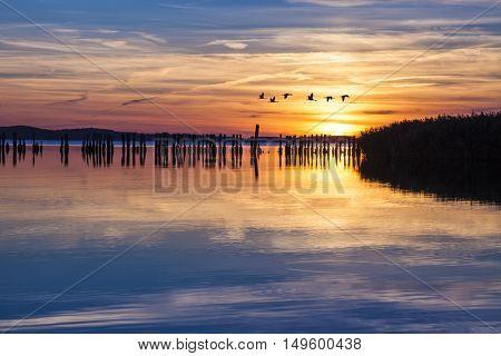 Flock of cranes in flight at sunset over Jasmunder Bodden lagoon, Ruegen, Germany