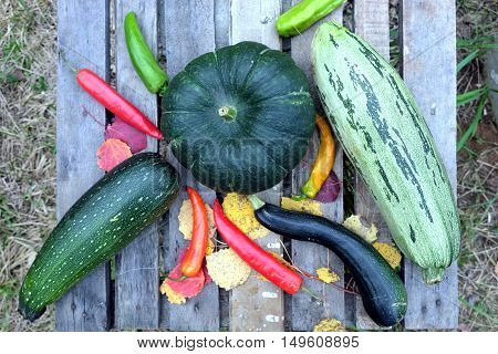 Autumn still-life with ripe vegetables. Hot pepper,  pumpkin, squash, zucchini on old wooden table top view closeup