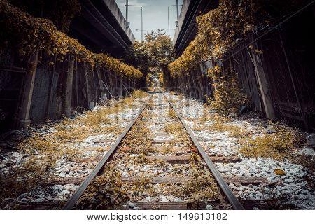 tree tunnel railway in city tone vintage