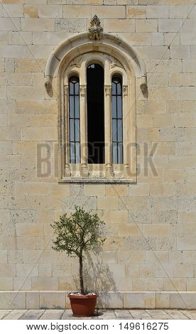 A small Olive Tree in a plant pot outside one of the windows of the Orthodox Church of Archangel Michael in old town Herceg Novi Montenegro.