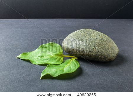 Green Leaf With Stones On Black Background