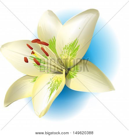 Realistic Vanilla Flower and Sticks. Orchid. Isolated Icon Illustration