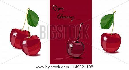 Ripe cherry. Set of vector illustration of cherries. Isolated