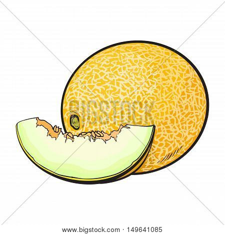 Ripe and juicy yellow melon, vector illustration isolated on white background. Drawing of fresh melon, muskmelon, cantaloupe - whole and a slice