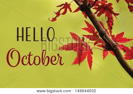 Hello October text on autumn background with red leaves