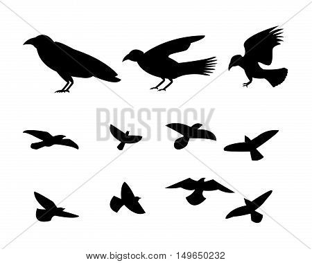 Silhouette flying raven bird in vector design