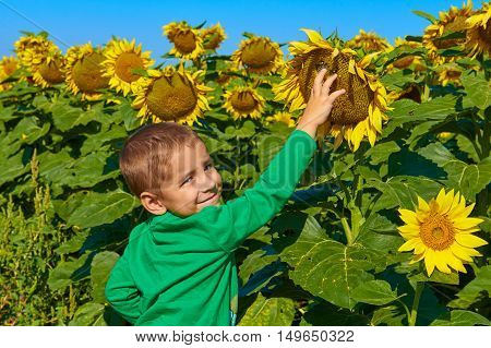 Portrait of a smiling child with sunflowers