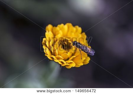 insect on a orange flower outdoor macro closeup