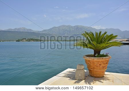 A palm plant looks out over Kotor Bay Montenegro.