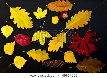 colorful autumn leaves on black background. The fallen leaves top view.