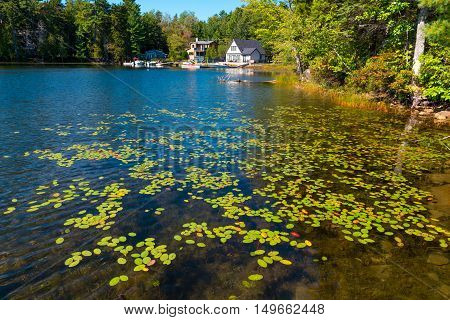 A trail of Autumn leaves floating in clear water leads to the shore with houses and boats in the background.