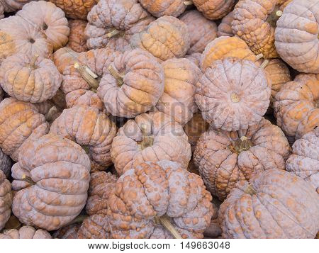Harvest: Heap of Japanese Black Futsu Squash Cucurbita moschata