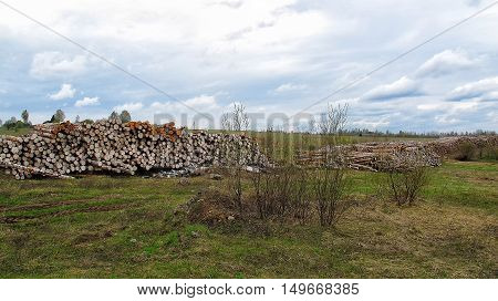 Racks with logs in the field environmental disaster. deforestation