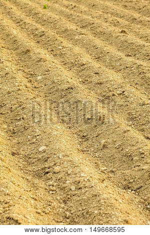 Furrows On The Field