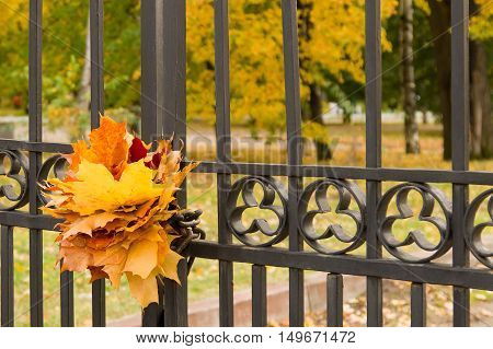Autumn concept: maple leaves on a fence of the park