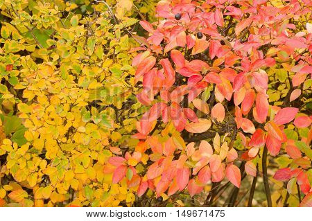 Colorful background of colourful autumn leaves, autumn concept