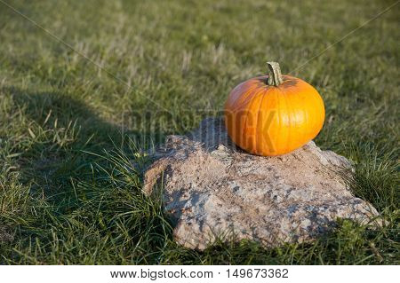 Harvested pumpkin on the stone in the field