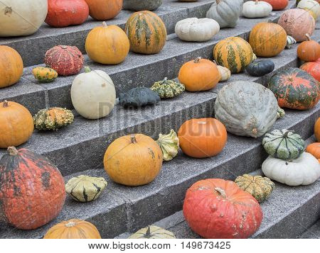 Stony Stairway With Many Different Colorful Squash And Pumpkins