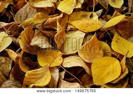 Beautiful colorful autumn leaves background close up