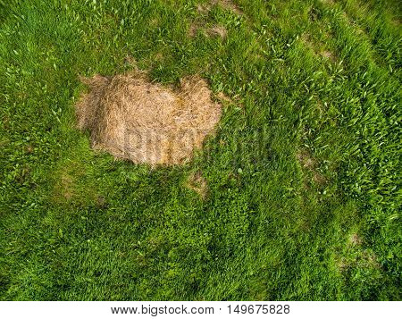 aerial view the bale of hay on a field of green grass