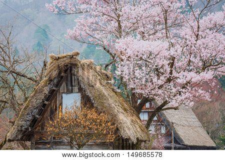 Traditional and Historical Japanese village Ogimachi - Shirakawa-go Japan